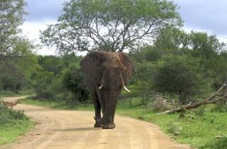 Big Five Hluhluwe/iMfolozi Safari